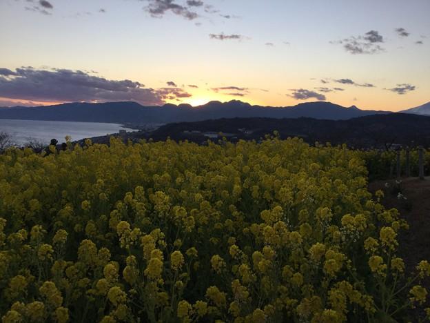 撮って出し。。今回は夕暮れ時を撮りに。。吾妻山公園 1月21日