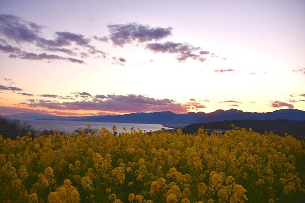 すっかり夕焼け空。。吾妻山公園の菜の花と相模湾 20170121