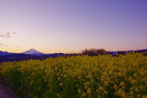 マジックアワーへ。。吾妻山公園の菜の花畑から空を。。20170121