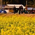 夕暮れ 伊豆河津町 菜の花畑を眺めて。。(^^)20170218