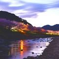 だんだんと日が暮れる伊豆河津町河津川 河津桜ライトアップへ20170218