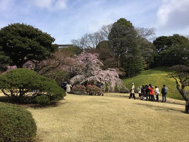 撮って出し。。満開の小石川後楽園の枝垂れ桜。。 4月2日