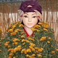 写真: 菊人形