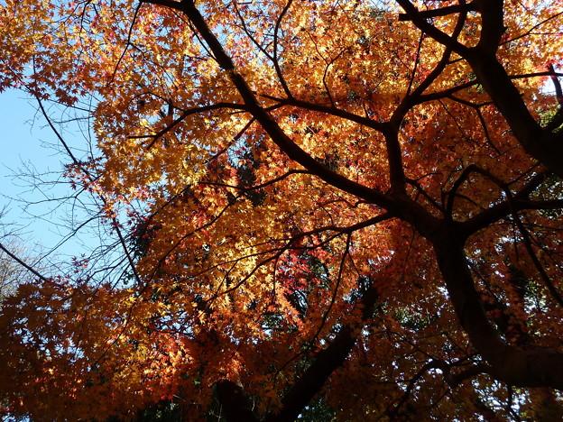 12_焼山寺