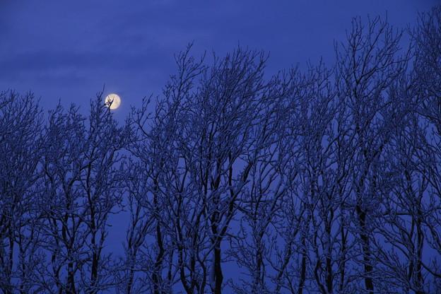 月は西に 日は東