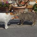 猫挨拶DSC06394