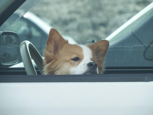 車内で主を待つ忠犬 vol.1