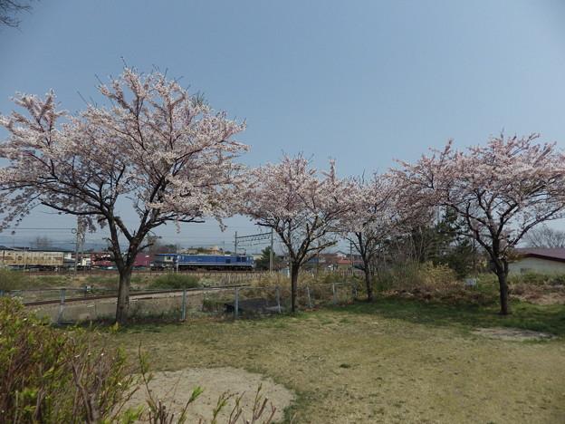 蔵出し~桜と貨物列車 vol.1
