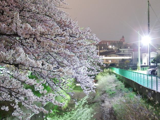 桜と列車の光跡