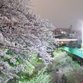 Photos: 桜と列車の光跡