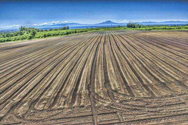 種まき時期の畑 1