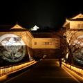 写真: 彦根城ライトアップ