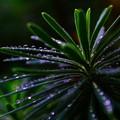 雨上がりの風景 ~雫~