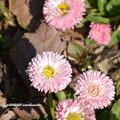 写真: 0051 花壇