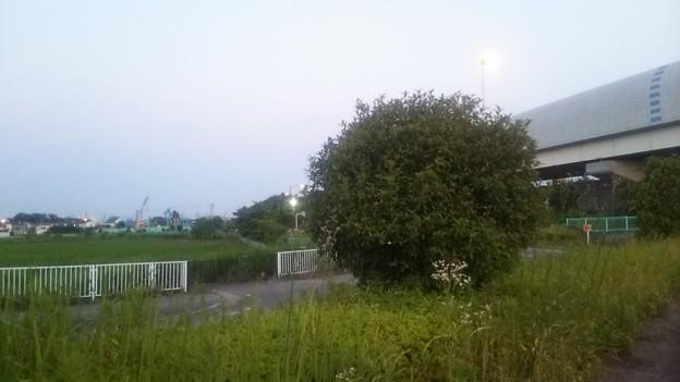 【6月10日は松伏町などへ21】こっちは左側