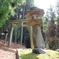 Photos: 須賀神社の鳥居と石灯篭