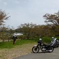 志文川堤防桜並木でランチ