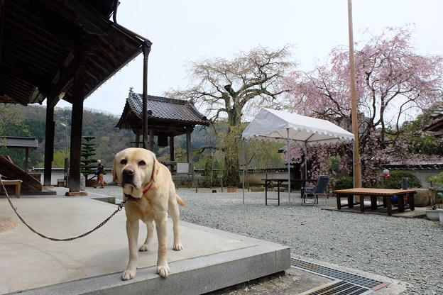 Photos: わんこ住職