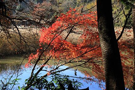 緑の森博物館の紅葉