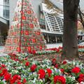Photos: 花とツリー