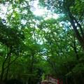 Photos: 下鴨神社 糺の森参道