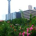 横浜マリンタワーとバラ