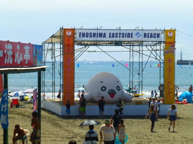 6メートルの巨大なゴマちゃん@片瀬東浜