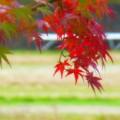 秋色に染まる@亀岡 烟河