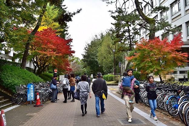 京都大学 吉田キャンパス
