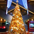 ヒルトンプラザのクリスマスツリ-