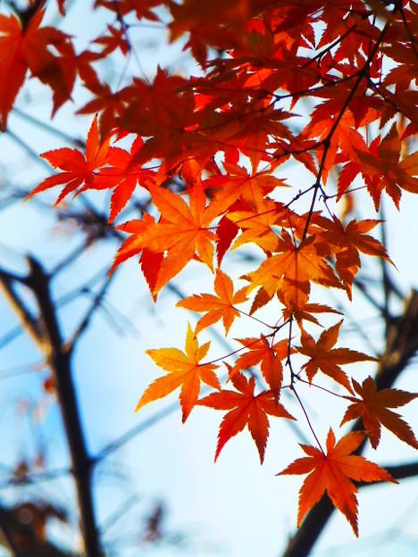 新梅田シティの紅葉