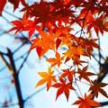 Photos: 新梅田シティの紅葉