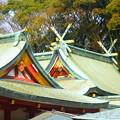 写真: えびすの杜を背景に佇む本堂の屋根