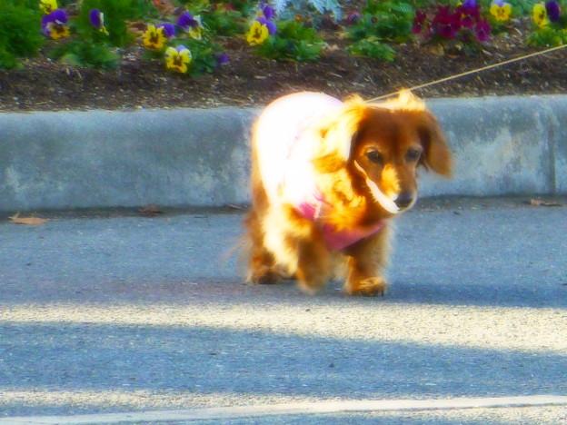 寒い冬も愛犬とお散歩
