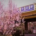 阪急十三駅の桜