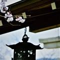Photos: 車折神社 境内