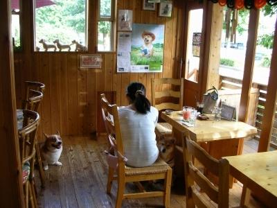 ドッグデイズ・カフェ