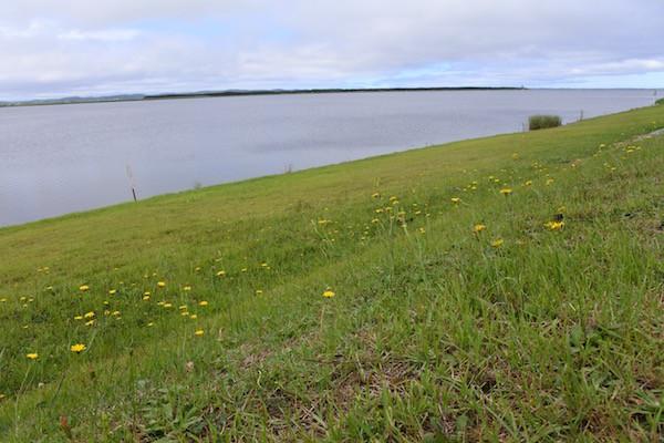 十三湖では可愛い黄色い花がお出迎え