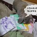 Photos: い1