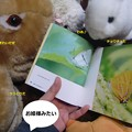 Photos: 虫2