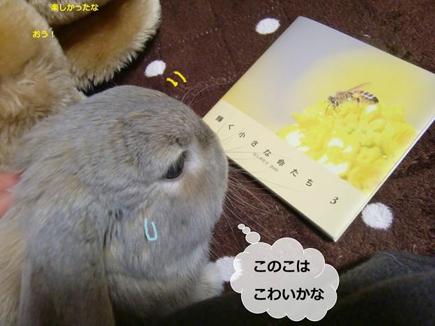 Photos: 虫5
