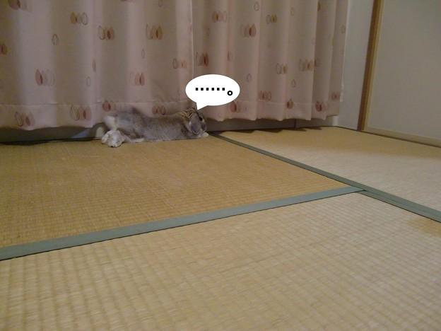 Photos: い3
