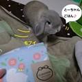 Photos: うさ小物4