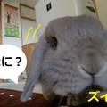 Photos: お花4