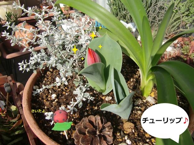 Photos: お花6