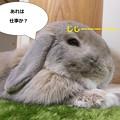 写真: あ4