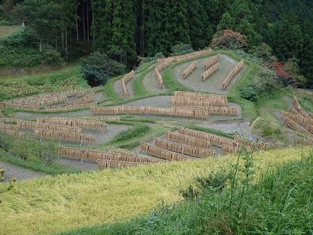 28 10 徳島 樫原の棚田