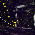 森の妖精♪(3)