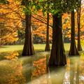 写真: 秋の九大の森♪