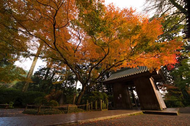 大興善寺の紅葉♪2